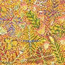 Bush Flowers and Bush Medicine Plants - © Margaret Ross Kamara