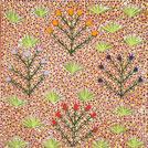 Bush Medicine Plants - © Beverly Luck Pula