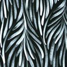 Bush Medicine Leaves - © Patricia Kamara