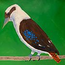 Birds That Live Around Yuendumu - © Graeson Nelio Jupurrula