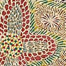 Acacia Plant - © Lily Lion Kngwarreye