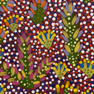 Bush Medicine Plants - © Rosemary Turner Ngwarraye