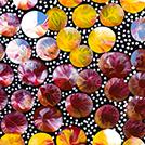 Bush Medicine Plant - © Eileen Bird Nungala