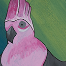 Birds that live around Yuendumu - © Jason Woods Japaljarri