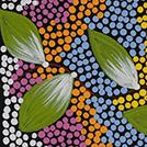 Seed Dreaming - © Marjorie Brown Nampijinpa